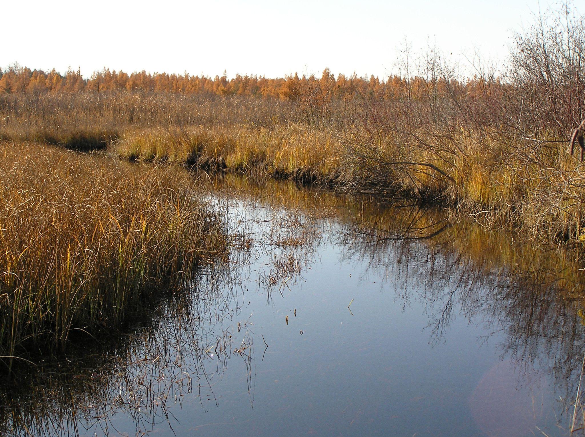 Noq_Wetland_downstream.JPG