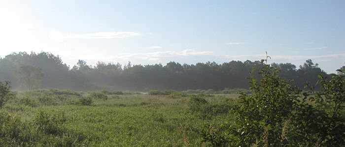 McMillanMarsh_700x299.JPG