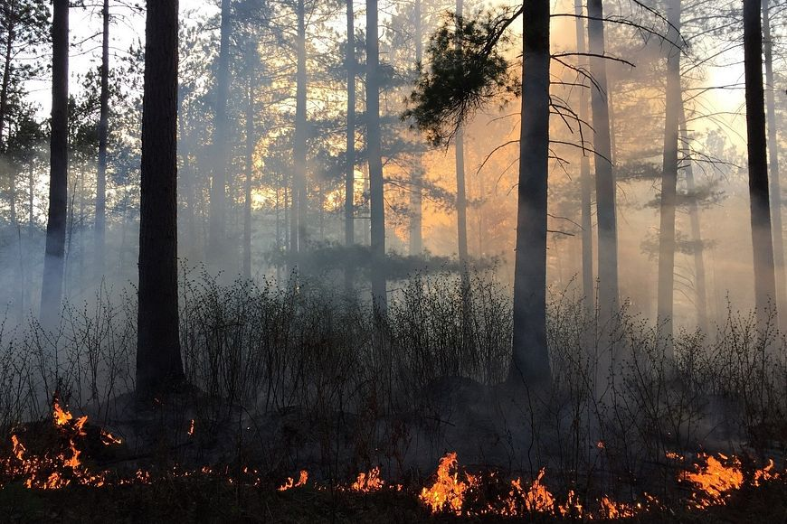 a prescribed burn with small flames and smoke takes place in a forested area