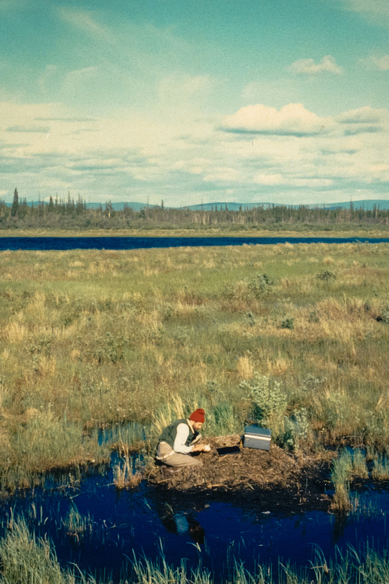 Photo of Alaskan landscape with man in foreground kneeling at swan nest