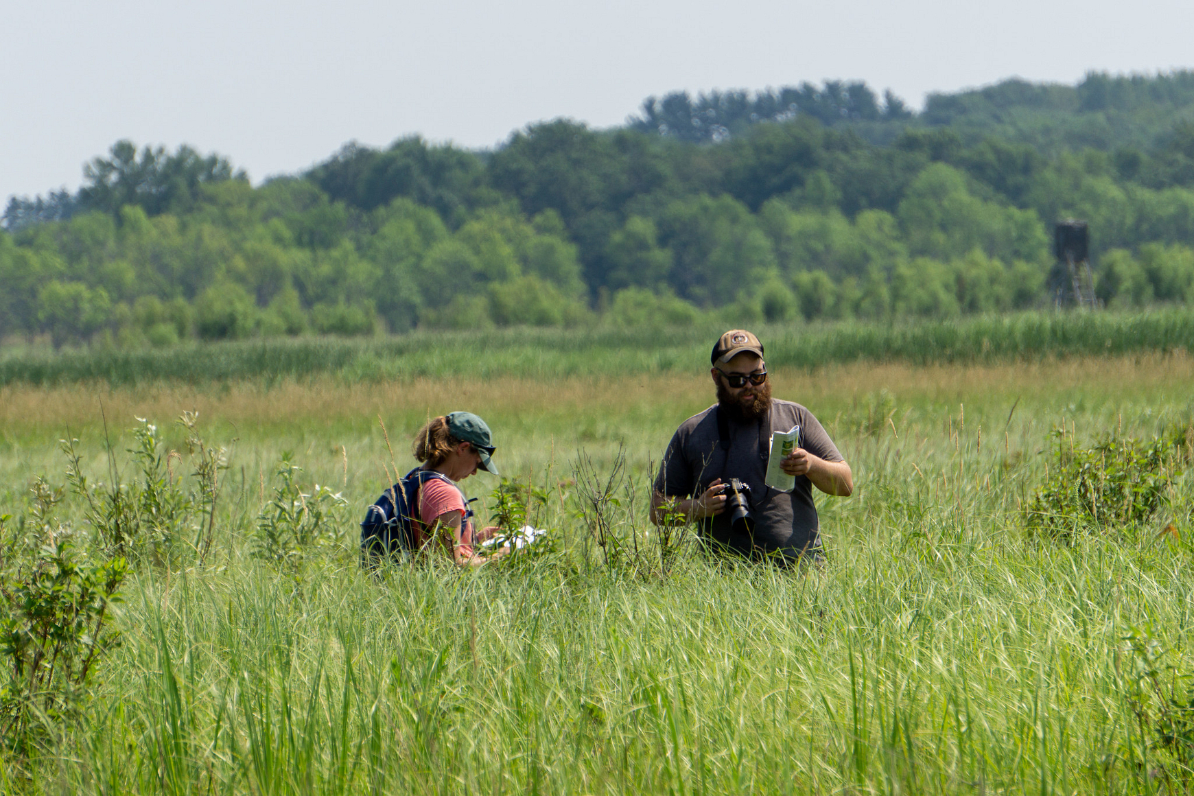 Man and woman in field of tall prairie grass surveying for butterflies