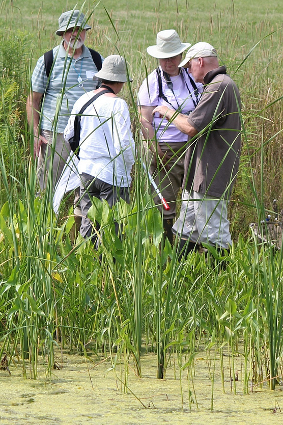 Four people in field gear standing in marsh inspecting a dragonfly