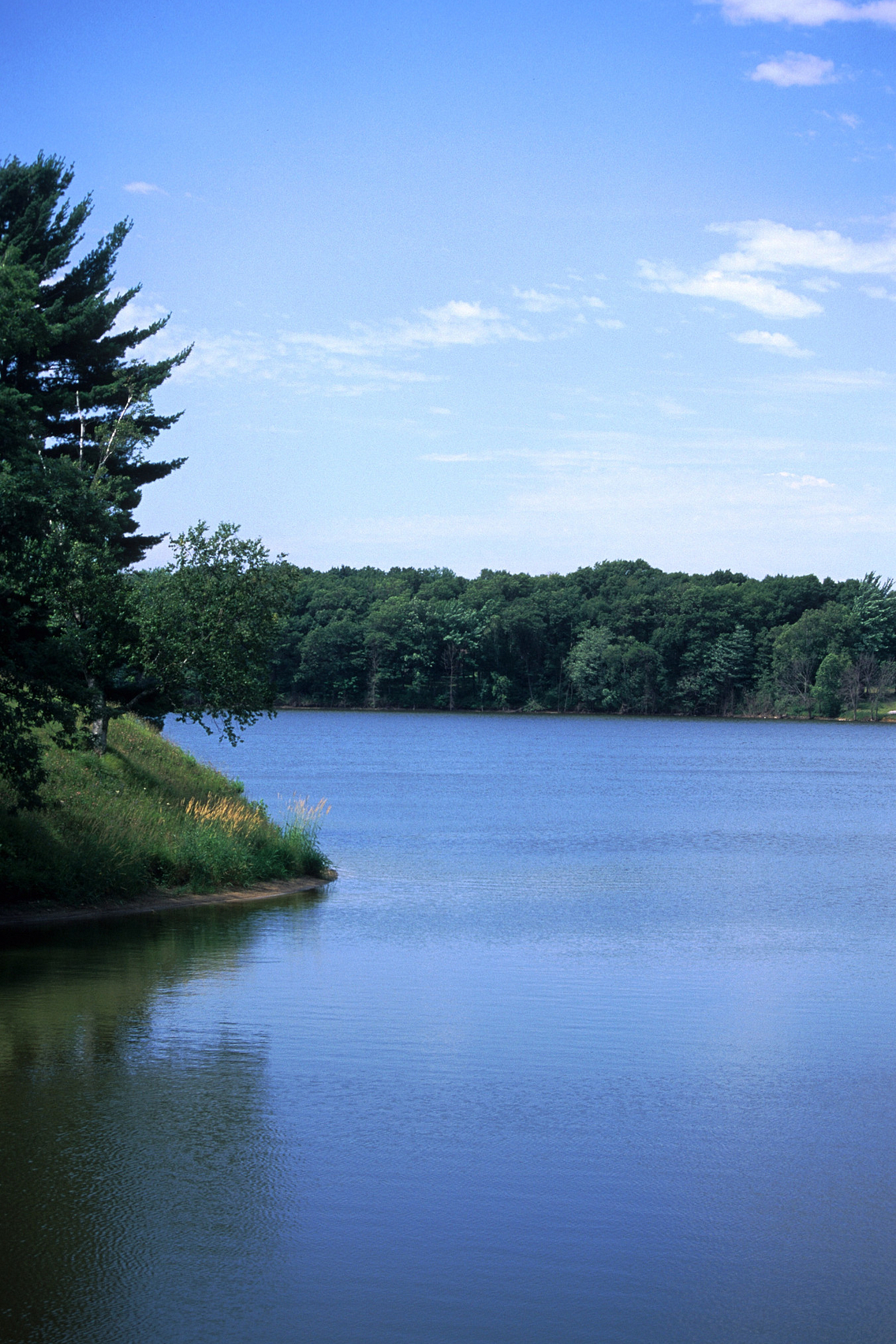 Pine tree overlooking edge of beautiful blue lake