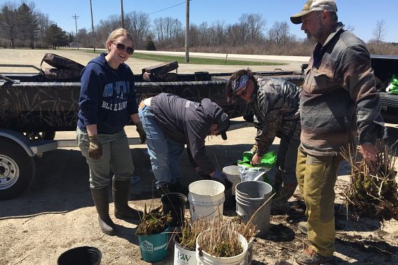a group works with potted purple loosestrife plants