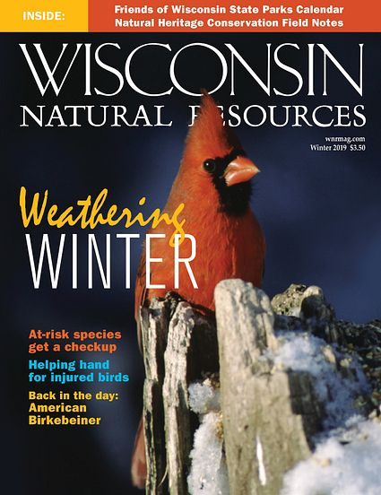 cover of Winter 2019 WNR magazine with red cardinal