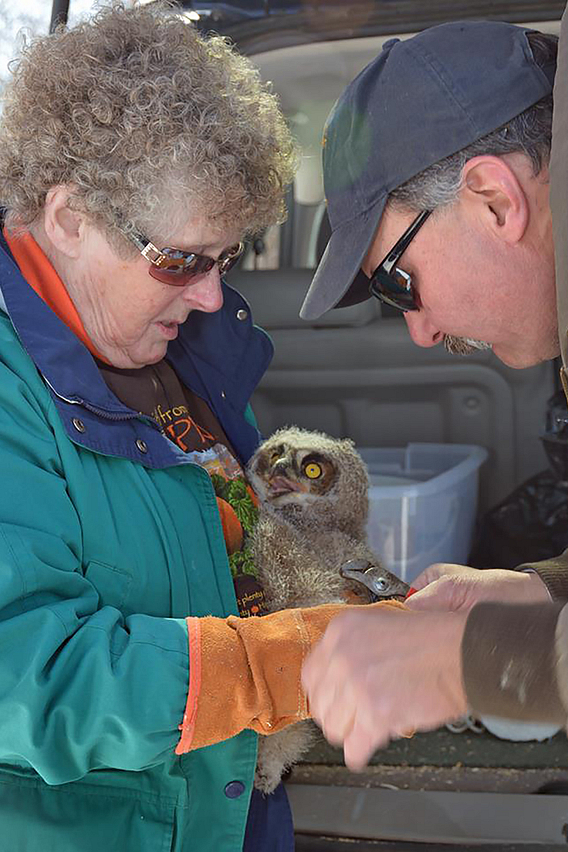 Man and woman in sunglasses tending to an owl she is holding