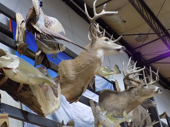 mounted deer heads at McFarlane's