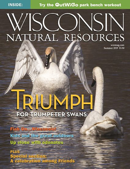 WNR magazine Summer 2019 cover with trumpeter swan