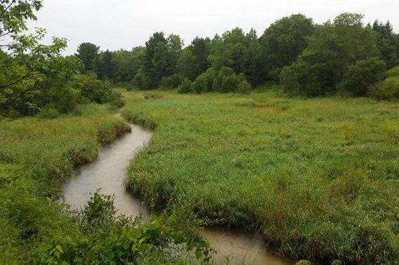 winding brook at Lawrence Creek