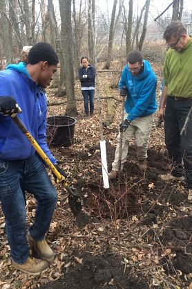 three people planting a tree in the woods