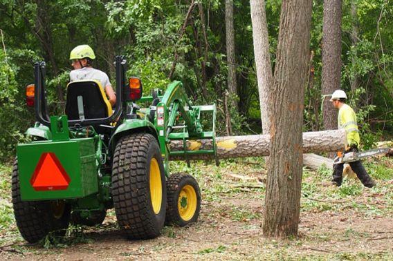 crew removing Amur cork trees with bobcat