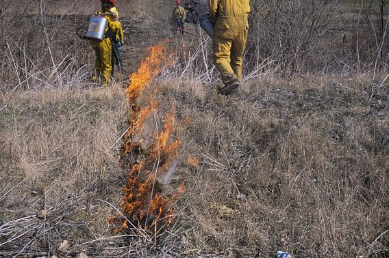 a controlled burn is conducted by trained field staff