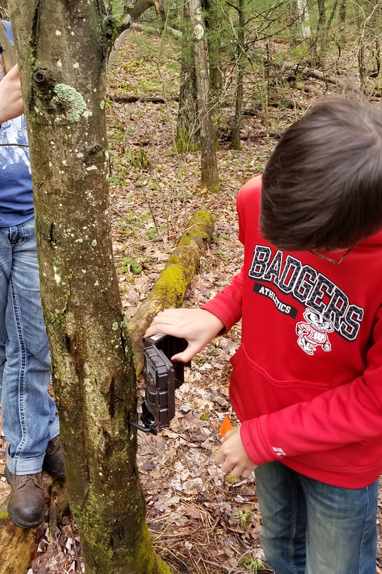 A young boy in red sweatshirt attaching a camera to a tree in the forest