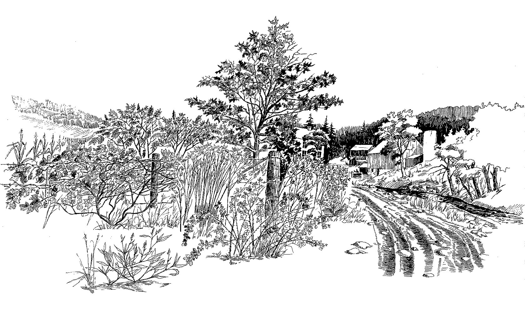 black and white drawing of a rural farm scene