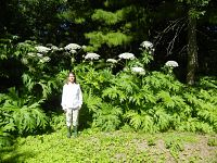woman stands beneath giant hogweed