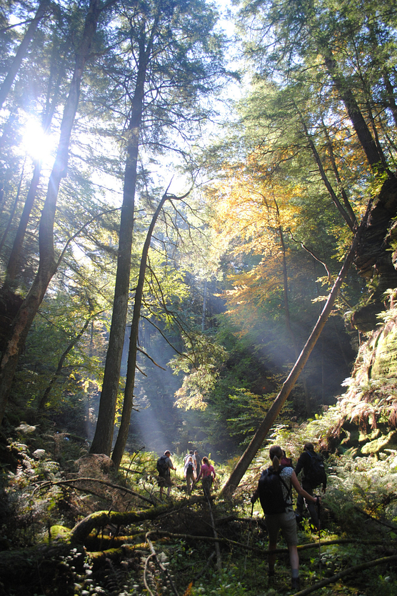 Photo of group of people walking through sunlit woods