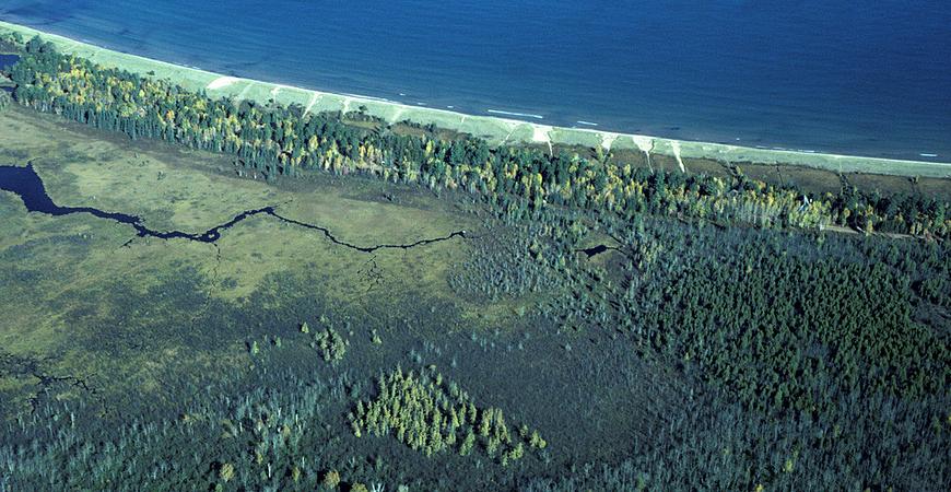 Lost Creek Bog